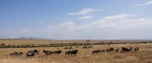 Masai_Mara_20130725_216