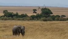 Masai_Mara_20130725_50