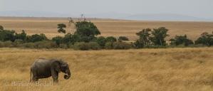 Masai_Mara_20130725_54