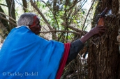 An elder uses milk to bless the olerien tree