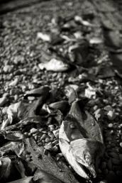 Kenai_Beach_10-Edit