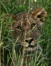 wildlife_pg1-2