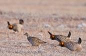 wildlife_pg20-2